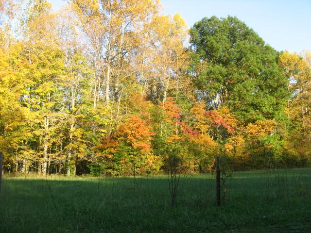 Trees along H%27ville-B%27ville Road image