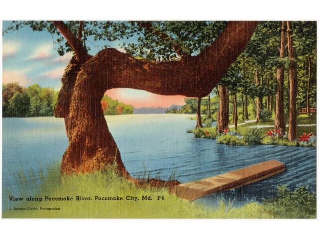 View along Pocomoke River  Pocomoke City  Md '70296' image