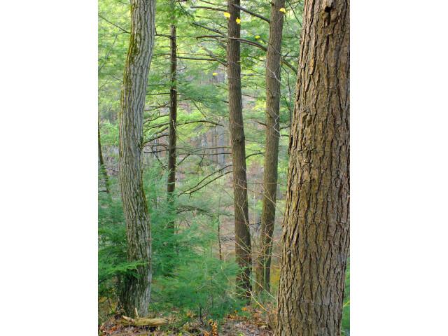 Fishing Creek Nature Preserve '1' image