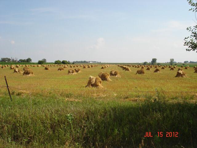 Amish Haystacks Fairbank  Iowa - panoramio image