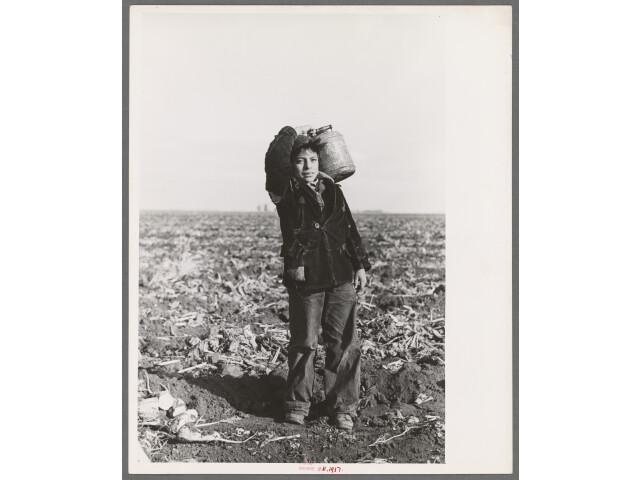 Mexican boy water carrier in beet field near East Grand Forks  Minnesota image