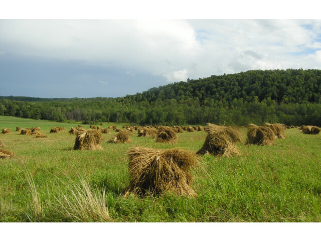Rural Stebuen County New York image