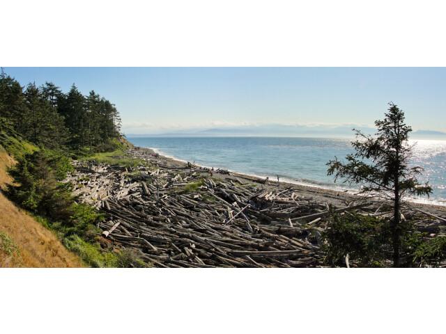Shoreline at Fort Ebey StatePark image