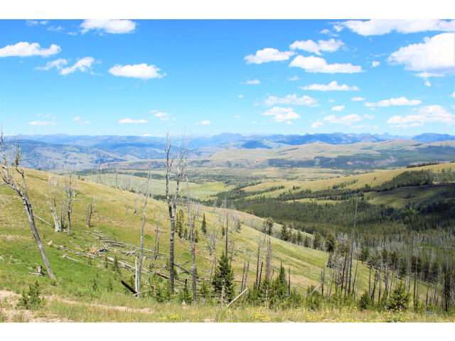 From Chittenden Road  Mt. Washburn  Yellowstone NP - panoramio - Aaron Zhu image