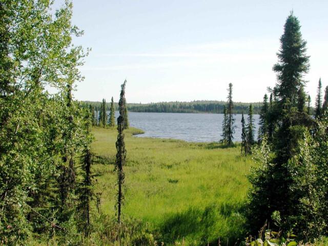 Tanaina lake image